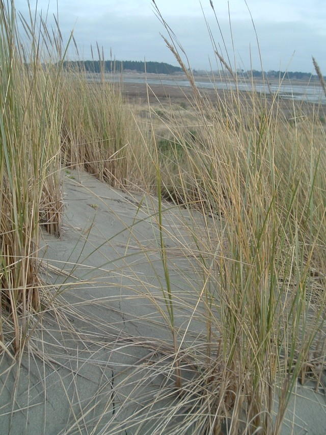 Brooklands lagoon dune pic 3 - 17 June 2011