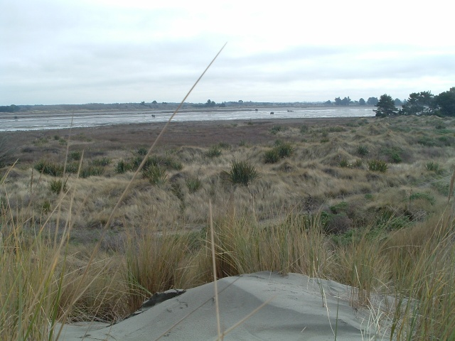 Brooklands lagoon dune pic 4 - 17 June 2011