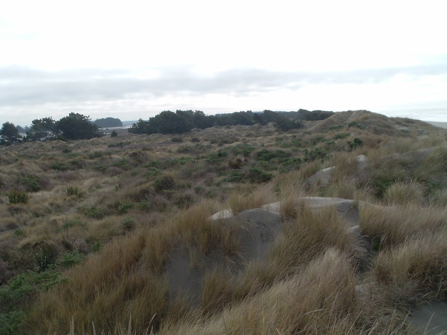 Brooklands lagoon dune pic 5 - 17 June 2011